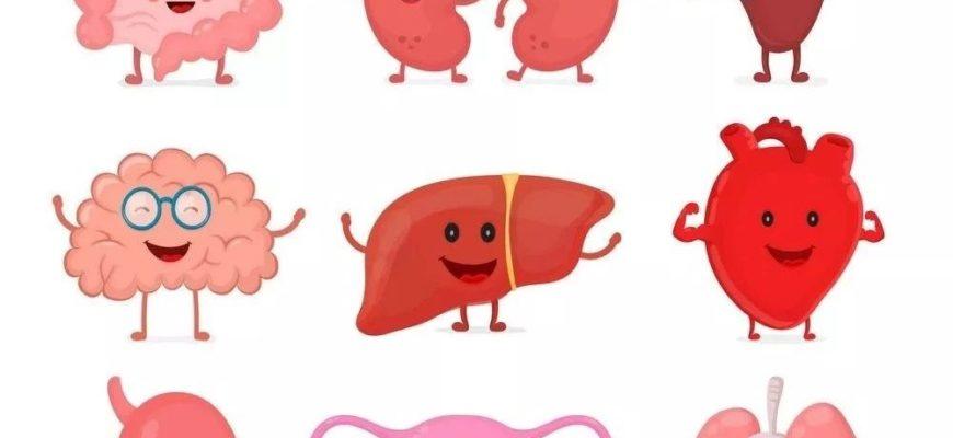 Веселые органы. Загадки про органы человека для малышей.