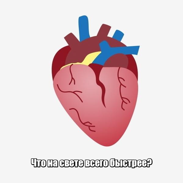 Что на свете всего быстрее? Сердце.