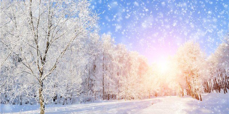 Лес зимой. Увлекательные детские головоломки про снег.