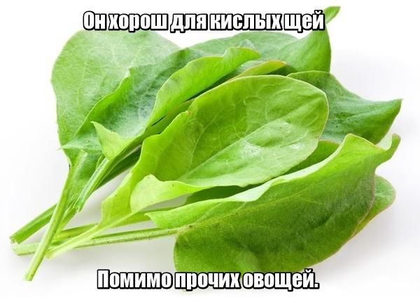 Он хорош для кислых щей Помимо прочих овощей. Щавель.
