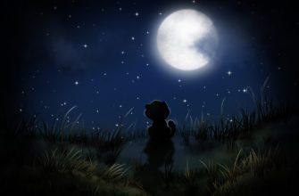 Котенок и ночное небо. Загадки с ответом ночь